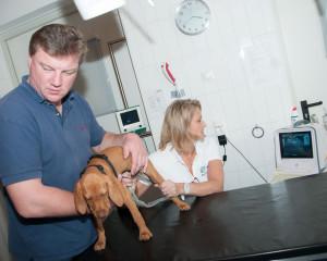 Ultraschall Hund