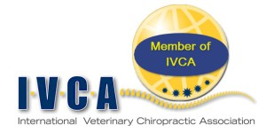 LOGO Member of IVCA